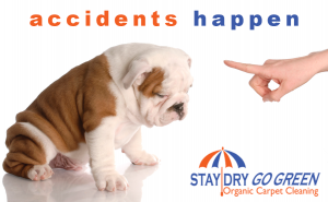 pet stain removal services in san jose california